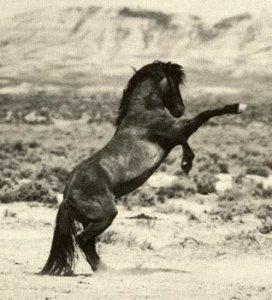 A wild horse